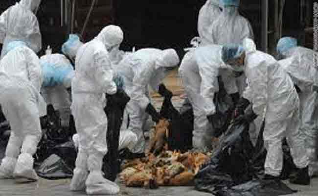 مرة اخرى غرداية على صفيح ساخن بسبب انفلونزا الطيور