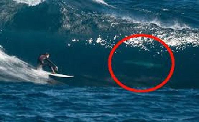 الجنون / عشاق تدفق الأدرينالين يذهبون لاستراليا للركمجة بالقرب من اسماك القرش
