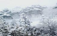 الحركة شبه منعدمة بقسنطينة بسبب التساقط الكثيف للثلوج