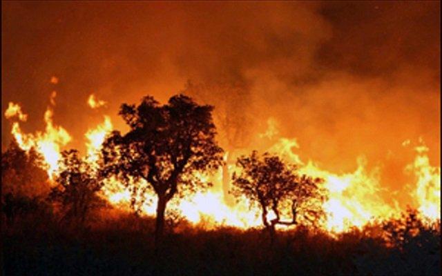 أطلقوا النار على كل من تسبب بحرائق الغابات