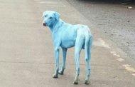 الرعب يملأ قلوب الناس بسبب تحول لون الكلاب إلى الأزرق