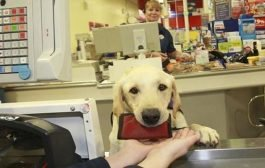 الوفاء / كلب يتسوق احتياجات صاحبته المريضة