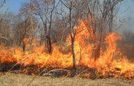 24 ساعة الأخيرة  كانت كافية لتسجيل 24 حريقا غابويا أتلف أكثر من 199 هكتارا