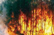 موجة حرارة قوية خلال 72 ساعة في تيزي اوزو   تسجيل اندلاع أكثر من 40 حريق
