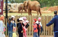 فاجعة مؤلمة في حديقة الحيوانات
