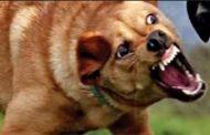 مصرع كهل بعد أن هاجمه كلب مسعور ببلدية سرغين بولاية تيارات