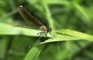 نصائح بسيطة لكم إذا كنتم تعانون من فوبيا الحشرات
