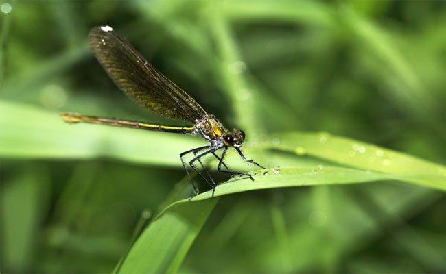 نصائح بسيطة لكم إذا كنتم تعانون من فوبيا الحشرات ...