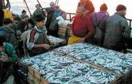 الثروة السمكية مهددة بالزوال خلال الـ20 سنة المقبلة