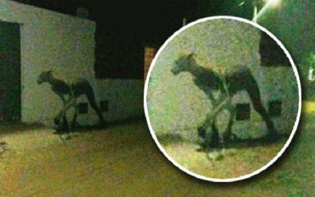في الأرجنتين مخلوق غريب يثير الرعب في الشوارع