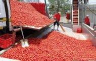 لتشجيع الإنتاج المحلي الحكومة ستوقف استيراد الطماطم المصبرة