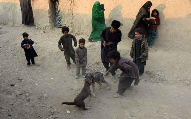 15 قتيلا في هجوم لـداعش على منزل أحد قادة طالبان
