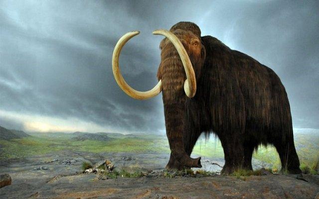 هل العثور على الماموث بالجزائر سيكشف حقائق كثيرة لأصل هذا المخلوق