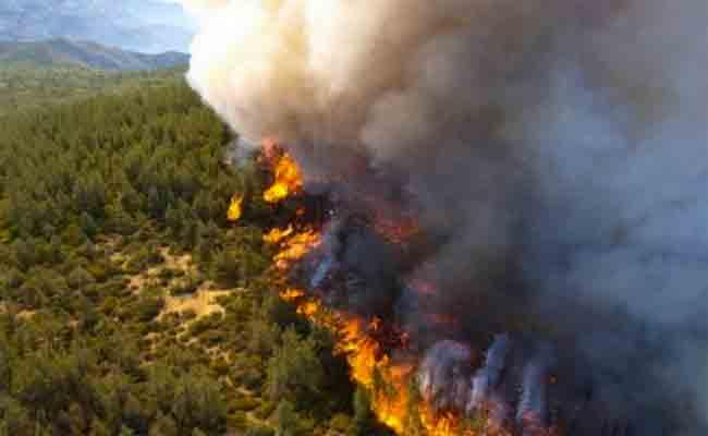 تسجيل إتلاف 313 هكتارا من الغابات بسبب الحرائق في ظرف أسبوع