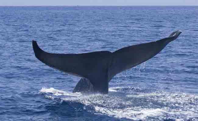 إطلاق عملية تحليق جوي في الجزائر العاصمة لحماية الحيتان