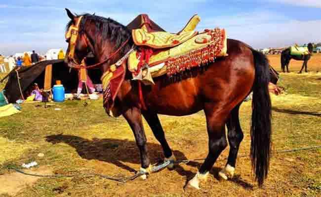 عرس يتحول إلى مأتم بعد قتل حصان فنتازيا لوالد العريس بميلة
