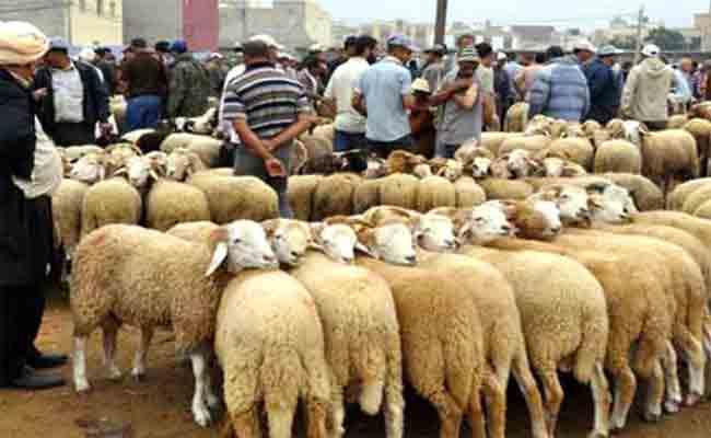 نصائح للمواطنين الراغبين في اقتناء أضاحي العيد
