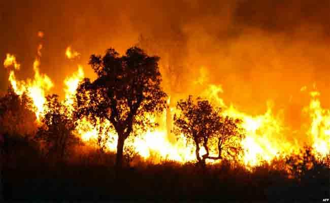 الحرائق تتسبب في اتلاف أكثر من 1260 هكتارا من الغابات في ظرف شهر