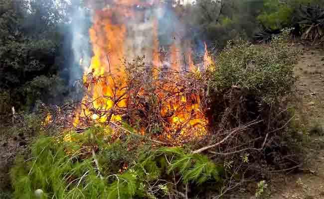 انخفاض محسوس في عدد الحرائق و المساحات المحروقة