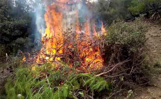 الحرائق تستنزف الثروة الغابية : اتلاف أزيد من 320.000 هكتارا غابيا ما بين 2008 و 2017