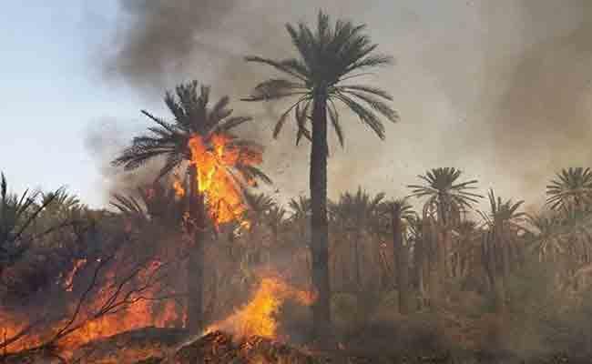 حريق مهول يتسبب في إتلاف 90 نخلة بقرية اقسطن في عين صالح