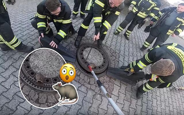 توقيف السيارات وفريق من رجال إطفاء لإنقاذ فأرً سمينً علق في
