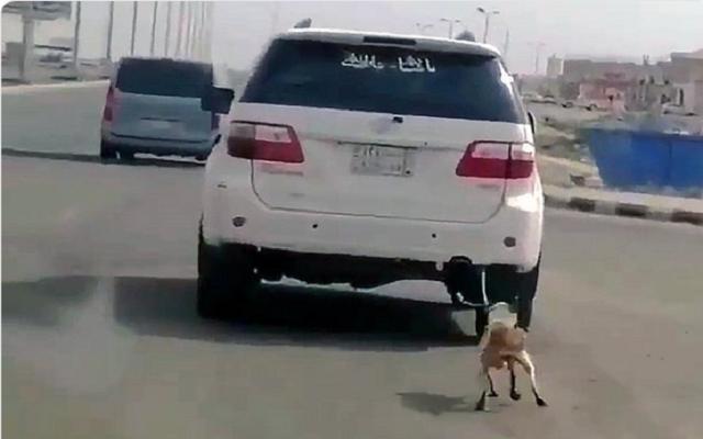 كائن سعودي يربط كلبًا بسيارته.. ويسحله بلا رحمة في شوارع