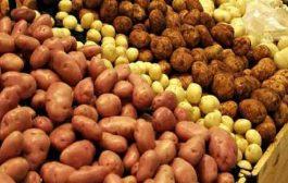 هل البطاطس مفيدة لمريض السكري