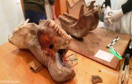 اكتشاف أثار حيوانات في فترة ما قبل التاريخ يعزز مكانة جلفة الأثرية:عز الدين ميهوبي