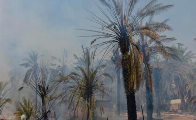 نشوب حريق بواحة الفيض في ولاية بسكرة يخلف اتلاف أزيد من 80 نخلة