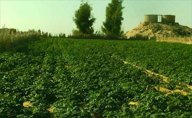 التحذير من أمراض فطرية اجتاحت الحقول في بومرداس