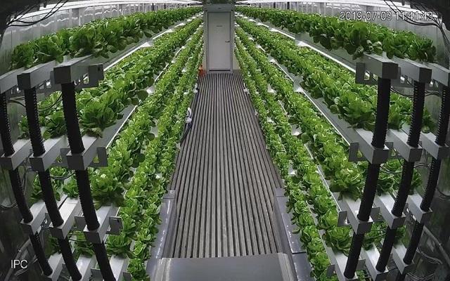 أول مزرعة ذكية في الشرق الأوسط...