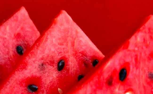 عناصر التغذية في البطيخ...
