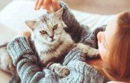 التعرّض للقطط قد يُسبّب أمراضاً... فهل انفلونزا القطط مُعدٍ...؟