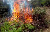 دعوات حقوقية لفتح تحقيقات حول حرائق الغابات