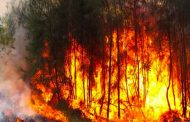 حرائق الغابات مست 38 ولاية و 98 بالمائة منها سببها بشري