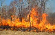 النيران تلتهمأزيد من 4 هكتارات من الأشجار الغابية بغابة
