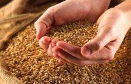 هل تنتقل حساسية القمح بشكلٍ وراثي...؟