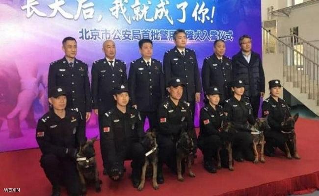 الجيل الخامس الصين تستنسخ 6 كلاب بوليسية...