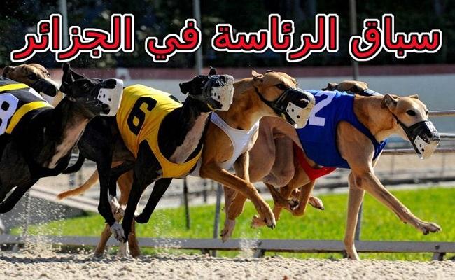 هذان الكلبان هما المفضلين للقايد صالح  من الكلاب الخمسة في الانتخابات الرئاسية