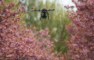 طائرات درون لزراعة مليار شجرة...