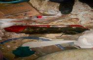 انفجار قارورة غاز يخلف مقتل امرأة و 3 جرحى بالأخضرية في البويرة