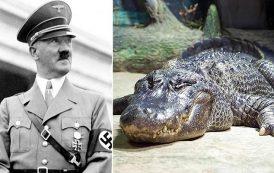 وفاة تمساح هتلر عن عمر 84 عاما...
