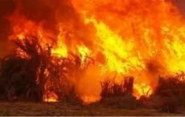 النيران تلتهم نحو 2 هكتار من الأحراش والقصب بمدينة العطف بغرداية
