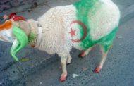 هل يلغى عيد الأضحى بالجزائر بسبب كورونا