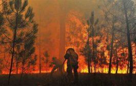 حرائق الغابات تتلف أزيد من 1.888 هكتار في ظرف أسبوع واحد