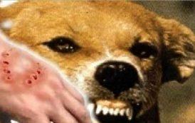 الجزائر تسجل 900 حالة إصابة بداء الكلب و 15 حالة وفاة