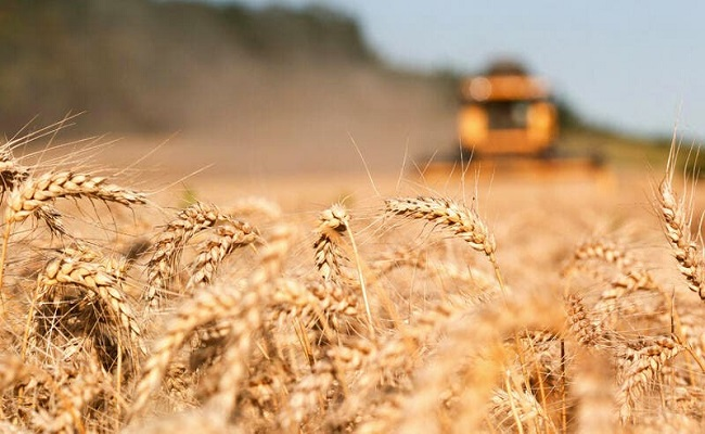 أوكرانيا تصدر منتوجات غذائية مسرطنة إلى دول العربية