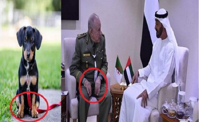 بعد وفاة الرئيس تبون هل يصبح الجنرال شنقريحة هو سيسي الجزائر