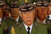 الجنرالات وصناعة دولة الغاب بالجزائر